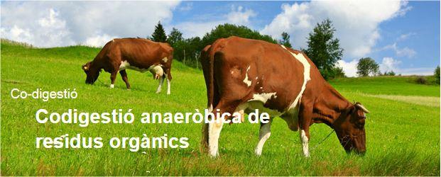 Co-digestió anaeròbia de residus orgànics
