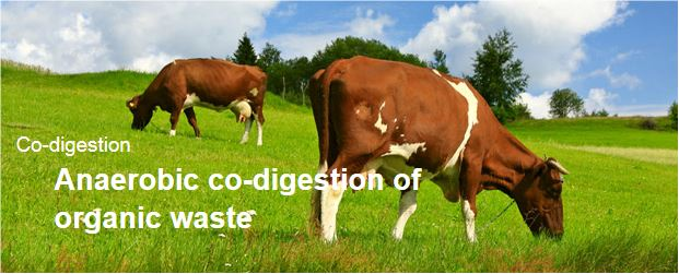 Organic waste anaerobic co-digestion