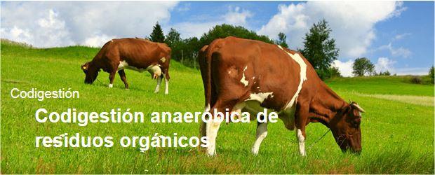 Codigestión anaeróbica de residuos orgánicos